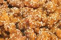 Free-- Sesame Chicken